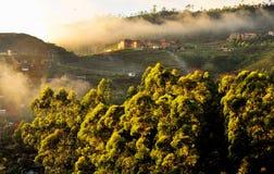Raggi e nebbia del sole di mattina Fotografia Stock Libera da Diritti