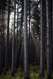 Raggi luminosi Fotografie Stock Libere da Diritti