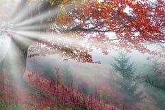 Raggi luminosi Fotografia Stock Libera da Diritti