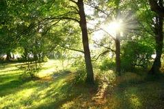 Raggi luminosi attraverso gli alberi Fotografie Stock