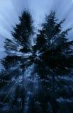 Raggi luminosi che scoppiano tramite i pini profilati alti su un mis Immagini Stock