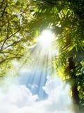Raggi luminosi di Sun attraverso gli alberi Fotografia Stock