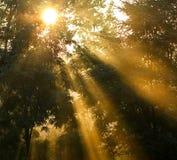Raggi lunghi del sole Fotografie Stock Libere da Diritti