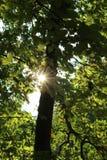 Raggi timidi del sole Immagini Stock