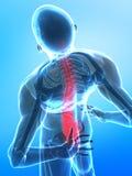 Raggi X umani della spina dorsale Fotografia Stock Libera da Diritti