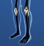 Raggi x del ginocchio, dolore, anatomia del corpo umano Fotografie Stock Libere da Diritti