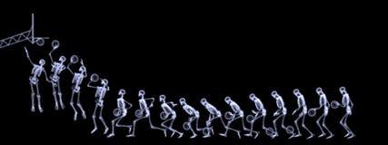 Raggi X di pallacanestro di gioco di scheletro umana Fotografia Stock Libera da Diritti