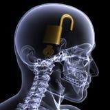 Raggi X di scheletro - mente sbloccata Immagine Stock Libera da Diritti