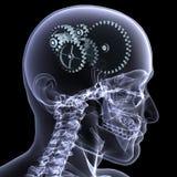 Raggi X di scheletro - rotelle una girata Immagini Stock Libere da Diritti