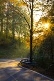 Raggio di Sun nella foresta Fotografia Stock Libera da Diritti