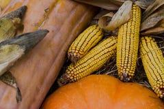 Raggiro e zucche in autunno immagini stock