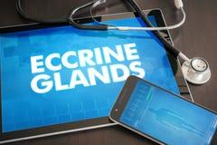 Raggiro medico di diagnosi delle ghiandole Eccrine (malattia cutanea riguardante) immagine stock libera da diritti