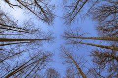 Raggiungendo verso l'alto al cielo di inverno fotografia stock
