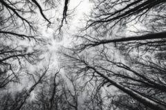 Raggiungimento del cielo Fotografia Stock Libera da Diritti