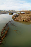 Raggruppamenti di marea nel Patagonia Fotografia Stock Libera da Diritti