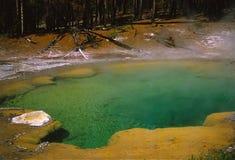Raggruppamento caldo dello zolfo in Yellowstone Fotografie Stock Libere da Diritti