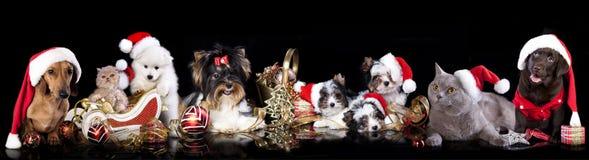 Raggruppi il cane e gatto e kitens che portano un cappello di Santa Fotografie Stock Libere da Diritti