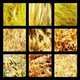 Raggruppi le fotografie di erba e delle piante Fotografia Stock
