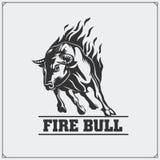 Raging Bull Emblema, etiqueta e crachá do vetor Fotos de Stock