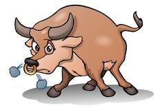 raging bull on isolated white Stock Photos