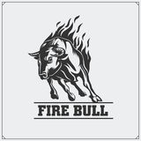 Raging bull. Vector emblem, label and badge. Stock Photos