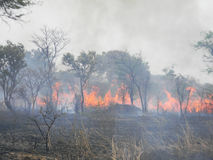 Raging  bush fire in  a  savannah  grassland. Chivhu,Zimbabwe,September 1  2015.Raging  bush  fire  in  savanna  grasslands  burning  grass  and  trees.Bush
