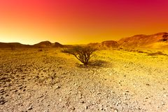 Raging colors of the desert in Israel. Stock Photo