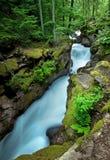 Raging Forest Creek. Avalanche Creek, Glacier National Park, at peak snow melt Royalty Free Stock Images