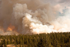 Raging forest fire Stock Image