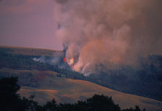 Raging Forest Fire. A fire burning through a forest Royalty Free Stock Image