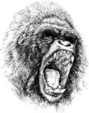 Raging gorilla illustration Stock Image