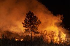 Raging grass wildfire at night. Inspiration for danger, bushfire warning, summer bushfire season posters or memes. Wallpaper or. Background of intense colour or stock photography