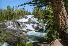 Raging rapids of the Crazy Creek Cascade, Wyoming, USA Stock Photography