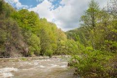 Raging river through green lush vegetation Stock Photo
