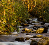 Raging stream in spring in Smokies Stock Image