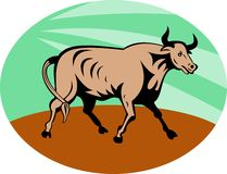 Raging texas longhorn bull Royalty Free Stock Image