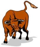 Raging texas longhorn bull