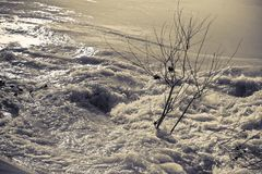 Raging waters and murky - Flooding after several days of torrent. Ial rain royalty free stock image