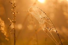 Ragnatela alla luce solare nebbiosa dorata Fotografia Stock Libera da Diritti