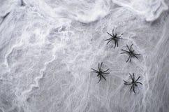 Ragnatela con i ragni neri sul fondo scuro della ragnatela, simbolo di Halloween Immagine Stock Libera da Diritti