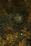 Ragnatela coperta in rugiada di mattina Autumn Moody Meadow fotografia stock