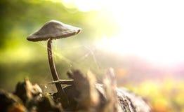 Ragnatela di ragnatela dell'albero del fungo Fotografia Stock Libera da Diritti