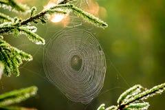 ragnatela in foresta, macro Immagini Stock Libere da Diritti