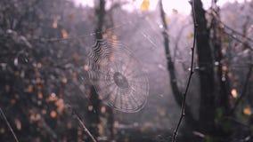 Ragnatela fra gli alberi forestali Il Sun sta splendendo con il web, legno nebbioso meraviglioso su fondo archivi video