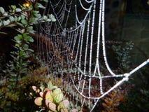 Ragnatela fragile su un ramo nella notte Fotografia Stock