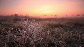 Ragnatela nella brina all'alba in autunno video d archivio