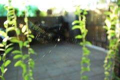 Ragnatela - ragno sul lavoro Fotografia Stock