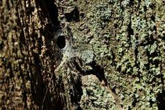 Ragnatela su un albero Fotografia Stock Libera da Diritti