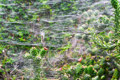 Ragnatela sui cactus del parco del ` s del Madera Fotografie Stock