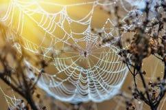 Ragnatele su erba asciutta alla mattina nebbiosa di autunno Immagine Stock Libera da Diritti